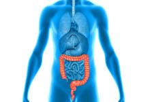 large intestine - large