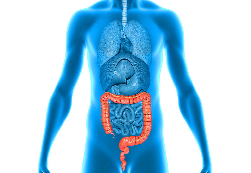Large Intestine Health: Affected By Diet and Emotions