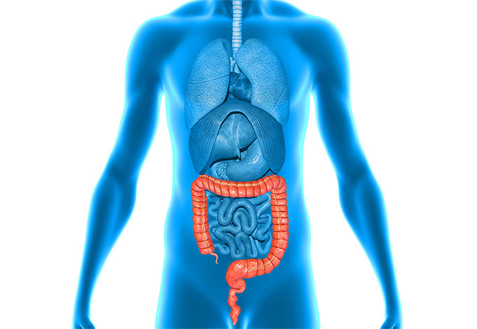Large Intestine Health Affected By Diet And Emotions