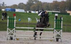 horseback eventing whipeout