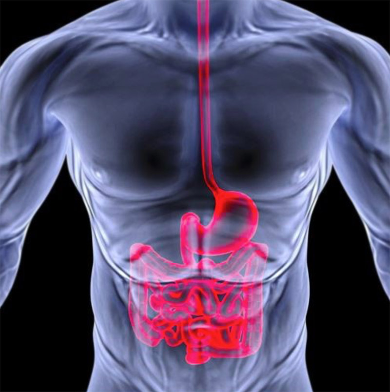 Struggling with IBS? Small Intestinal Bacterial Overgrowth (SIBO) may be the Cause!
