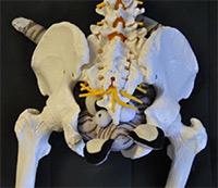 baby 3 in pelvis