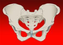 """pelvic pain: """"Pubalgy"""""""
