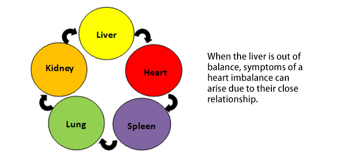 liver-heart connection