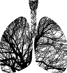 lungs are the most external organ in the human body