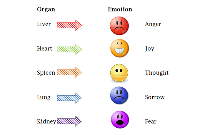our organs and our emotions are tied together