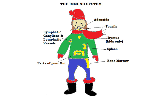 Immune System Cartoon Diagram Healthy By Nature